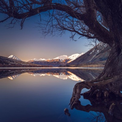 Gnarly old tree in still Lake Pearson frame mountains in New Zeland